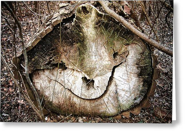 Greeting Card featuring the photograph Tree Face by Menega Sabidussi