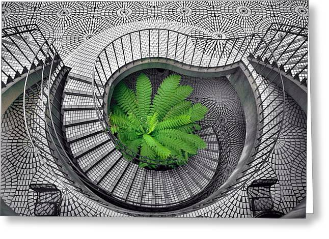 Tree Fern In The Stairs Greeting Card by Daniel Furon