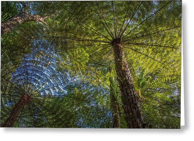 Tree Ferns From Below Greeting Card