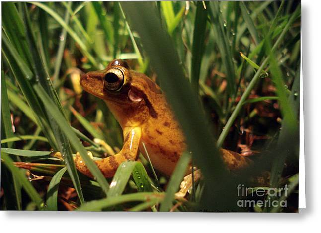 Tree Frog Chorus Greeting Card