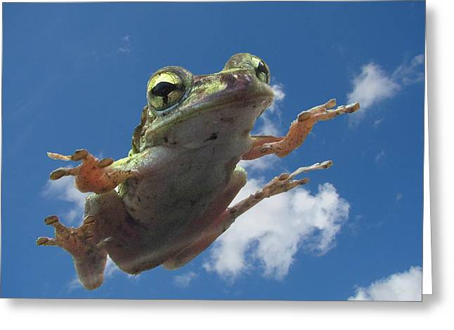 Tree Frog Flying Greeting Card by Richard Chen