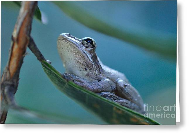 Tree Frog Gray Looks Up Into Blue Greeting Card by Wayne Nielsen