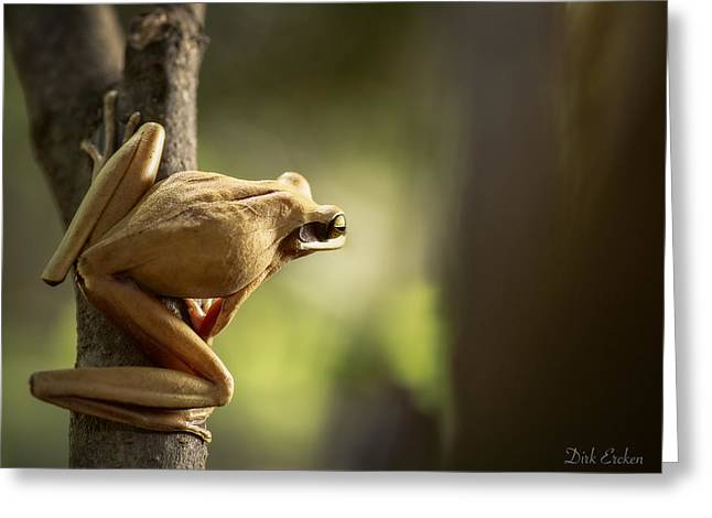 Tree Frog Ready To Jump Greeting Card