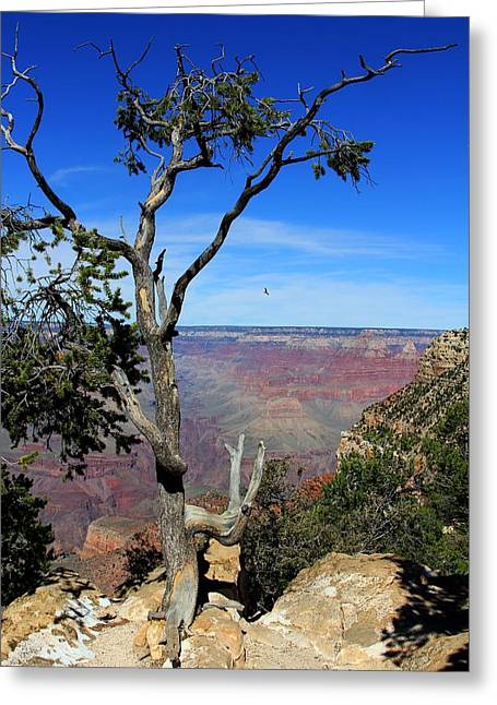 Greeting Card featuring the photograph Tree Grand Canyon by Michael Hope