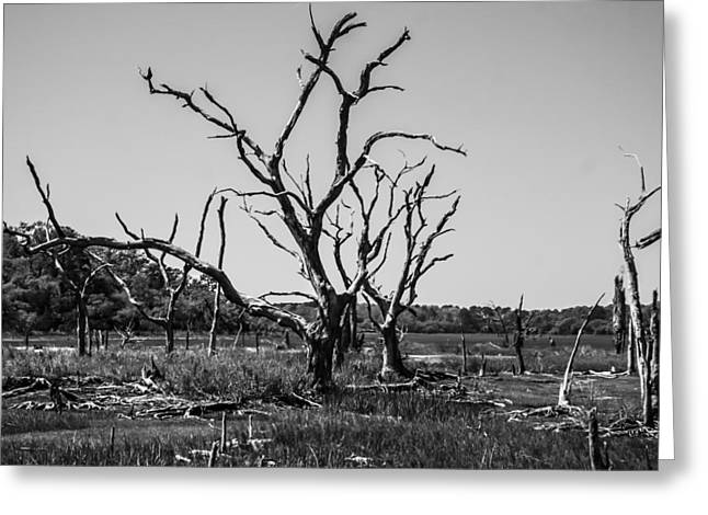 Tree Graveyard Greeting Card by Steven  Taylor