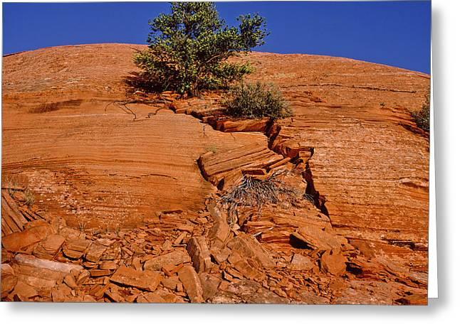 Tree Growing On Rock Face Greeting Card by Panoramic Images