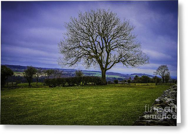 Tree - Hadrian's Wall Greeting Card