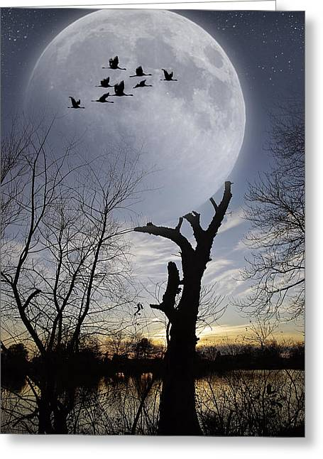 Tree Holding Up The Moon Greeting Card by Brian Wallace