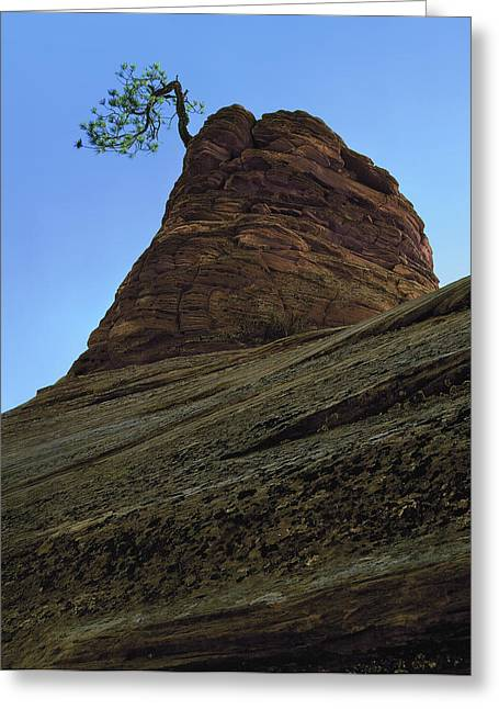 Tree Hoodoo Greeting Card