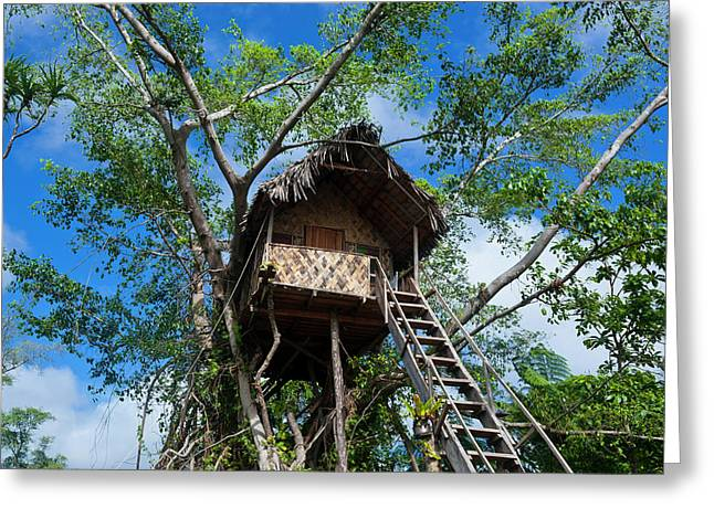Tree House In A Banyan Tree Greeting Card