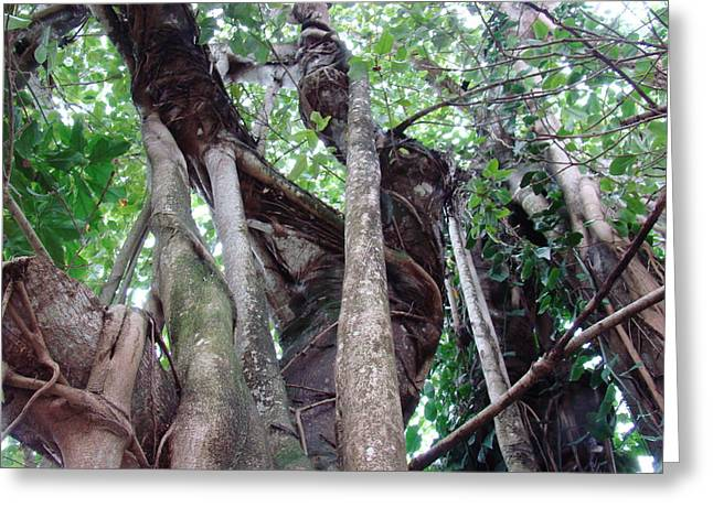 Tree Hugger 3 Greeting Card by Van Ness
