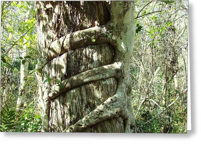 Tree Hugger 5 Greeting Card by Van Ness