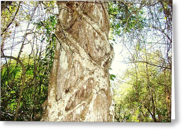 Tree Hugger 7 Greeting Card by Van Ness
