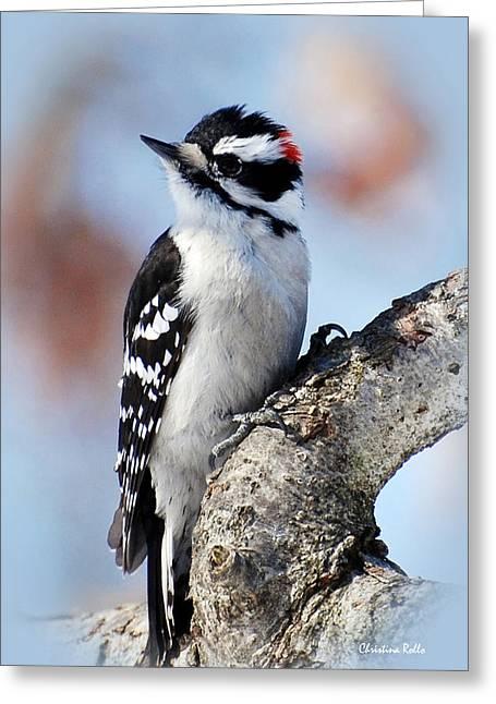 Tree Huggin' Nut Lover Greeting Card