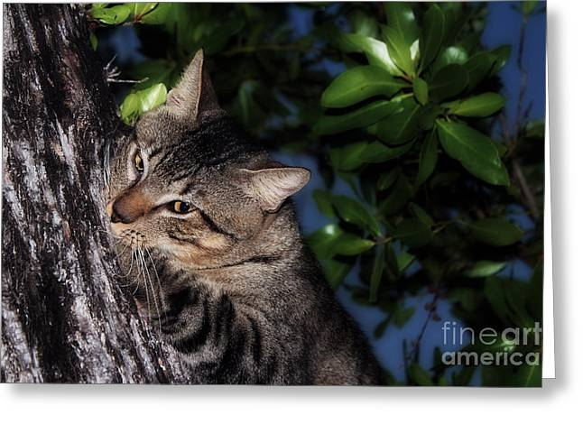 Greeting Card featuring the photograph Tree Hugging Cat by Marjorie Imbeau