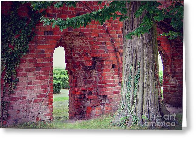 Greeting Card featuring the photograph Tree In An Old Cloister by Art Photography