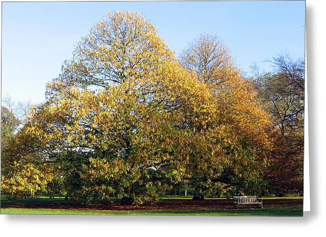 Tree In Kew Gardens Greeting Card