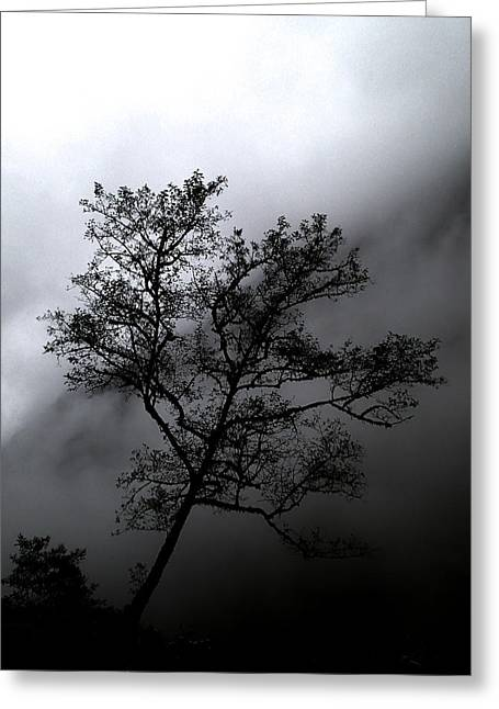 Tree In Mist Greeting Card