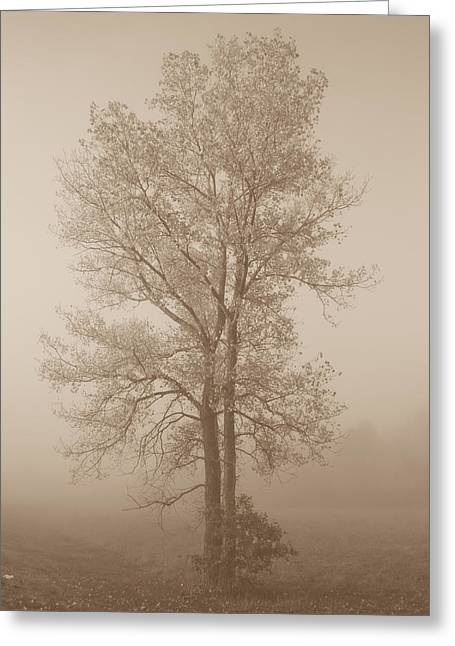 Tree In Morning Fog Greeting Card by Eje Gustafsson