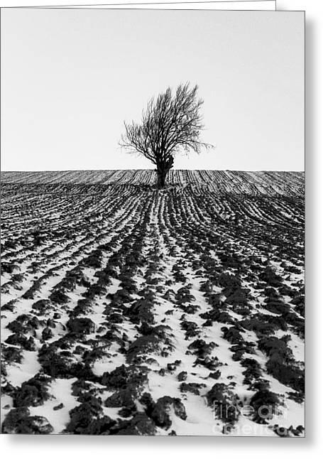 Tree In Snow Greeting Card by John Farnan