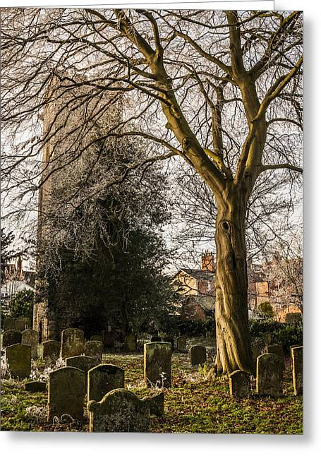 Tree In St Mary Magdalene's Church Yard Greeting Card