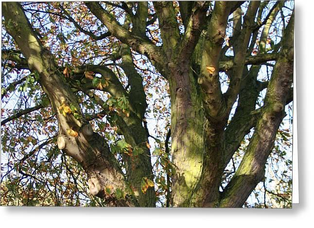 Tree In Sunlight Greeting Card