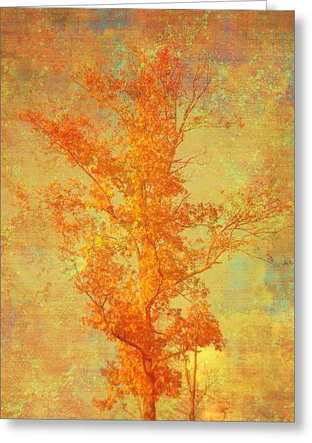 Tree In Sunlight Greeting Card by Suzanne Powers