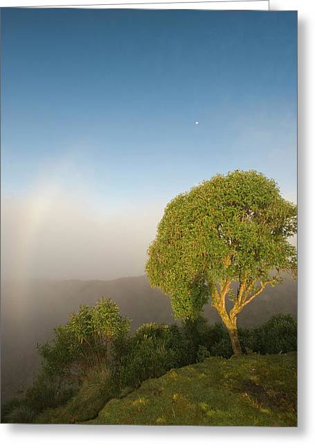 Tree In Sunlight, Tres Cruces Region Greeting Card