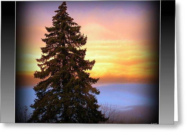 Greeting Card featuring the photograph Tree In Sunrise by Michelle Frizzell-Thompson