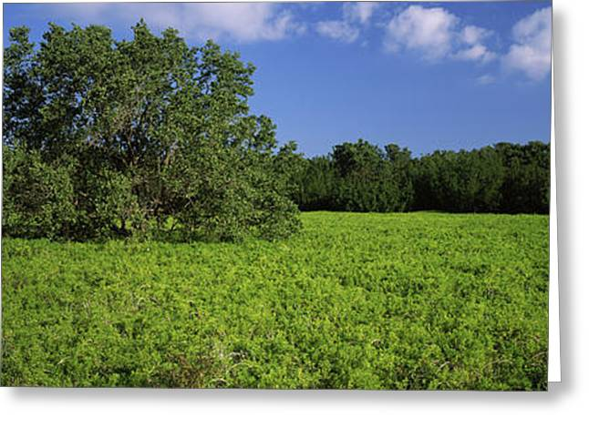 Tree In The Field, Everglades National Greeting Card by Panoramic Images