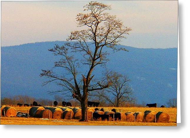 Tree In The Field Greeting Card by Joyce Kimble Smith