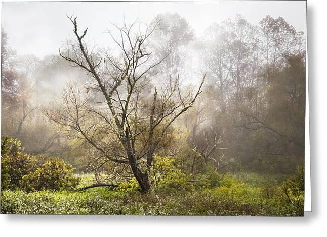 Tree In The Fog Greeting Card by Debra and Dave Vanderlaan