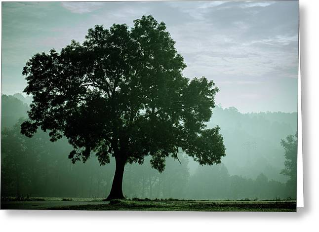 Tree In The Fog Greeting Card