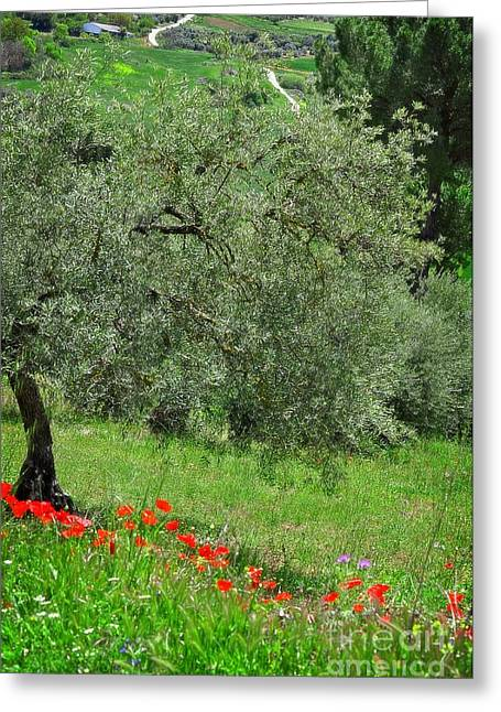 Tree In The Meadow Near Ronda  Greeting Card by Mary Machare