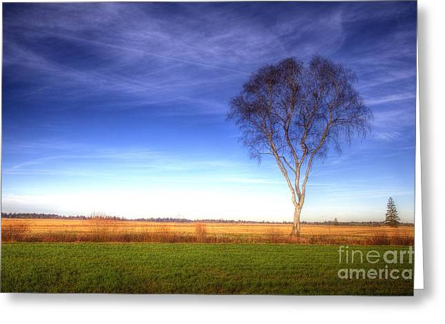 Tree In The Murnauer Moos Greeting Card