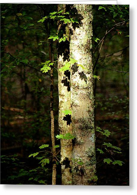 Tree In The Woods Greeting Card