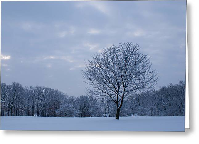 Tree In Winter Greeting Card