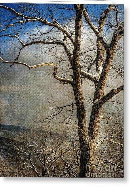 Tree In Winter Greeting Card by Lois Bryan
