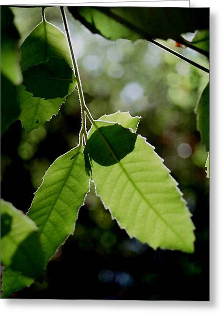 Tree Leaves Greeting Card by Alfredo Martinez