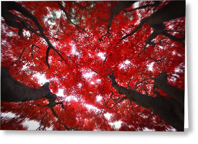 Greeting Card featuring the photograph Tree Light - Maple Leaves Fall Autumn Red by Jon Holiday