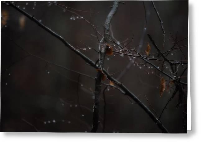 Tree Limb With Rain Drops 2 Greeting Card by J Riley Johnson
