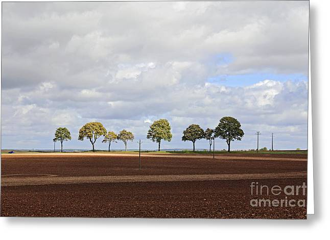 Tree Line France Greeting Card