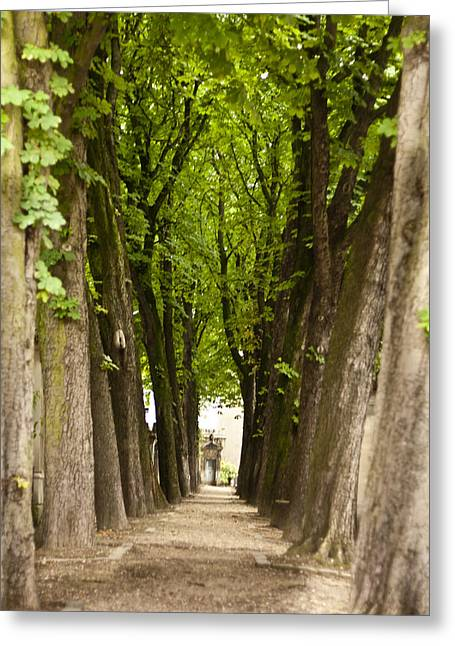 Tree Lined Avenue At Pere Lachaise Greeting Card by Georgia Fowler