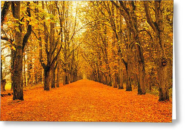 Tree-lined Road Loire Chenonceaux France Greeting Card