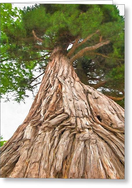 Greeting Card featuring the photograph Tree Mass by Marion Johnson