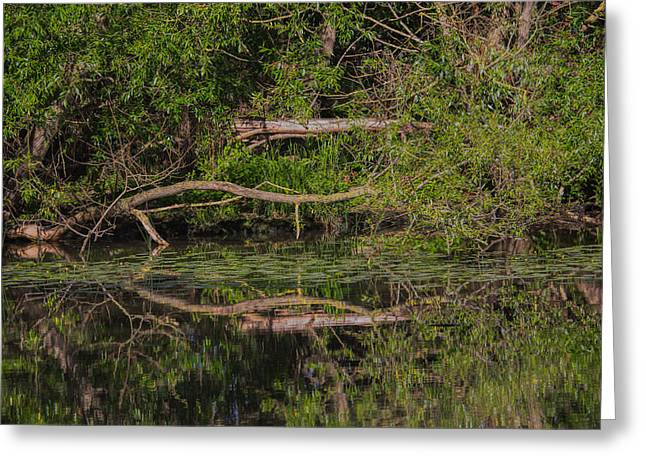 Greeting Card featuring the photograph Tree Mirroring In Water by Leif Sohlman