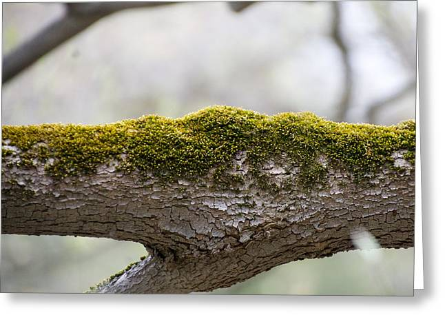 Tree Moss Greeting Card by Mark Holden