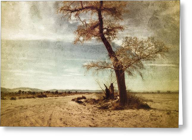 Tree Near The Road Greeting Card by Pam Vick