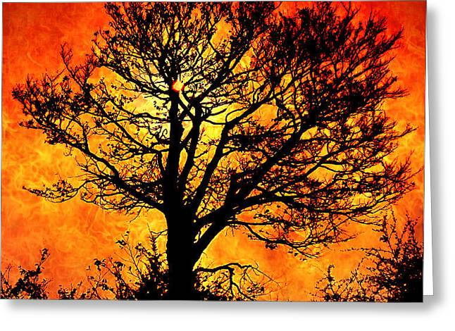 Tree Of Fire Greeting Card by Persephone Artworks