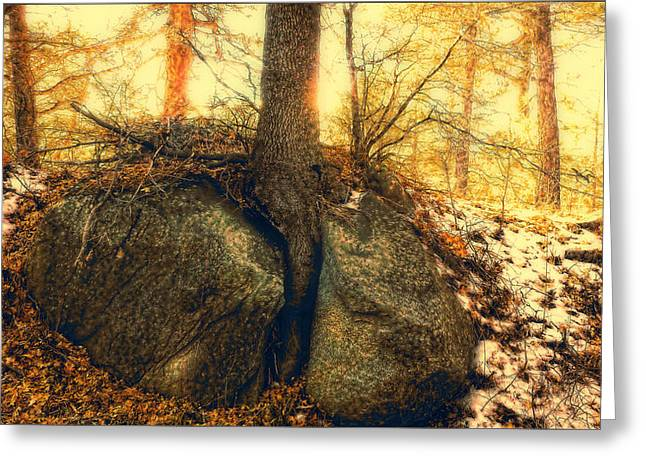 Tree Of Inspiration Greeting Card by Douglas MooreZart